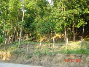 Rush Sale (Negotiable), Farm land with Mahogany, Narra, Etc., San Fernando City, La Union