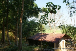 P236/SQM Only, 2 Houses, 300+ Trees, With Overlooking View, Ambaracao, Naguilian, La Union