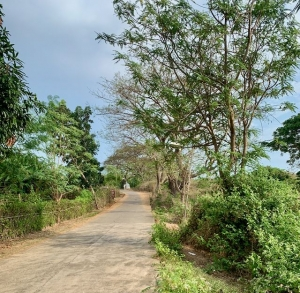 Elevated Lot with Tress, With 2 Wide Road Frontage, Bacnotan, La Union