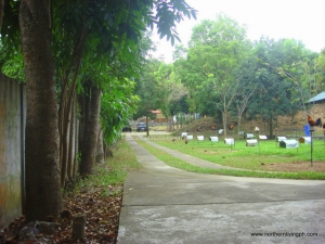 A Ranch-Type Property, 15 Minutes From the City Center, San Fernando City, La Union
