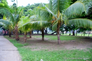 Huge Lot with Fruit-Bearing Trees, Near National Highway, Bauang, La Union