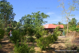 Fixer-Upper Bungalow Home in 1.5 Hectares Lot Near Town Proper, Bauang, La Union
