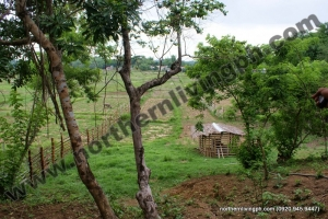 RESERVED! Titled Agricultural Land w/ Water Source & Electricity Connection, San Juan, La Union